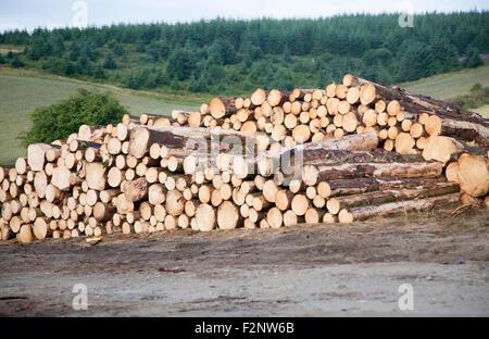 Tree felling forestry operations in dartmoor national park, Bellever forest, Postbridge, Devon, England, UK - Stock Photo