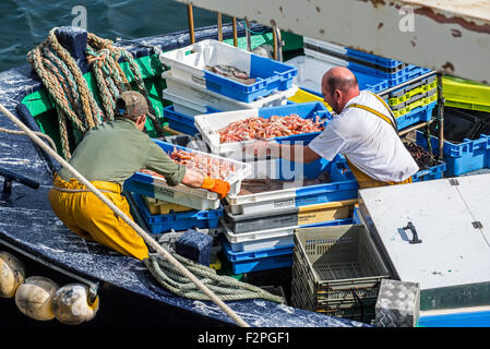 Fishermen on board of trawler fishing boat unloading catch along quay of the fish auction market in the Guilvinec - Stock Photo