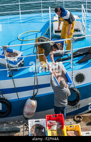 Fishermen on board of trawler fishing boat unloading catch along quay of the fish auction market - Stock Photo