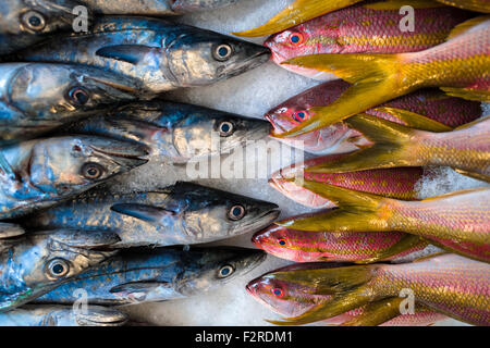 Red snappers and small wahoos are seen for sale at the seafood and fish market in Veracruz, Mexico. - Stock Photo