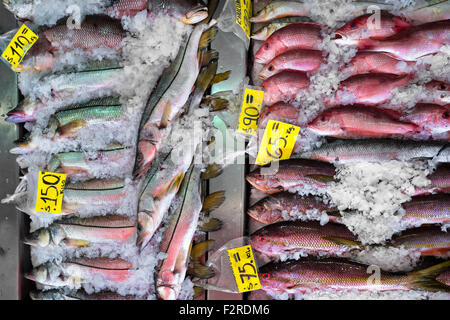 Red snappers are seen for sale at the seafood and fish market in Veracruz, Mexico. - Stock Photo