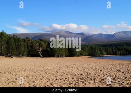 Loch Morlich Beach in Aviemore, Scotland Highlands with a view of the Cairngorm Mountain. Blue Sky, Beach with trees - Stock Photo