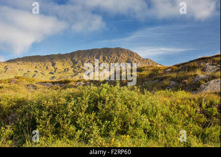 Bog myrtle  western gorse and heather in the Caha Mountains, near Glengarriff, Beara, County Cork - Stock Photo