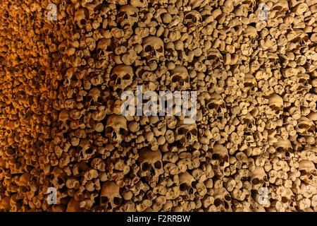 Human Bones - Stock Photo