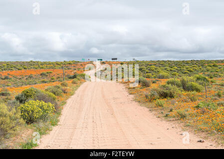 Patches of orange wild flowers as far as the eye can see. Namaqualand, South Africa - Stock Photo