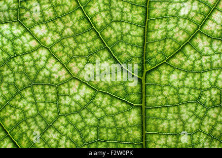 Abstract closeup of a leaf - Stock Photo