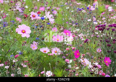 Flower meadow in late summer. - Stock Photo