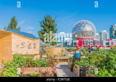 Woman in community garden, False Creek, Vancouver, British Columbia, Canada - Stock Photo