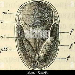 Embryologie, ou, Traité complet du développement de l'homme et des animaux supérieurs - Stock Photo