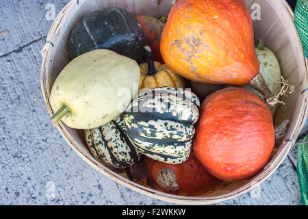 Basket with pumpkins and squashes at the local food market (Sunday farmers market in Baie Saint Paul, Quebec, Canada) - Stock Photo