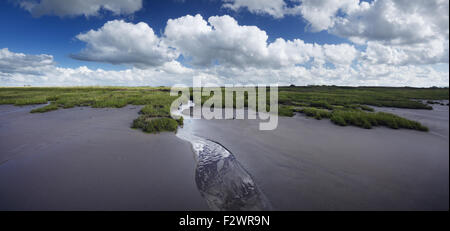 Coastal marshes near Steart Point. Steart Marshes. Somerset. UK. - Stock Photo