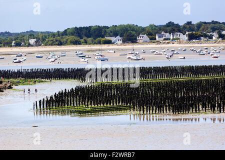 Mussel farming in Baie de Pen-Bé, Loire-Atlantique, France - Stock Photo