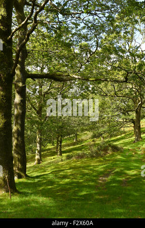 A sun dappled path through English woodland on a beautiful English Summers Day. - Stock Photo