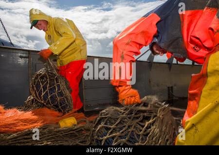 Dutch fishing vessel fishing on the North sea for sole and flounder - Stock Photo