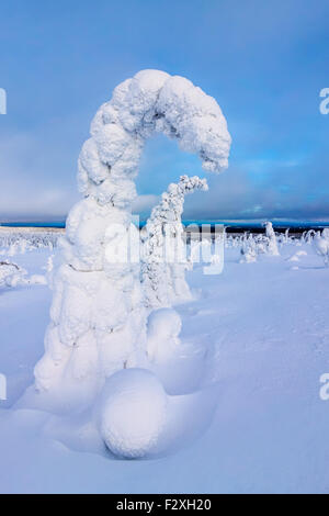 Snow-covered spruce trees - Stock Photo