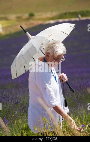 Senior woman with parasol enjoying the lavender at Lordington Lavender Farm, Lordington, Chichester, West Sussex - Stock Photo