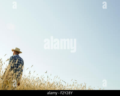 A man standing in a field of ripening wheat crop. - Stock Photo