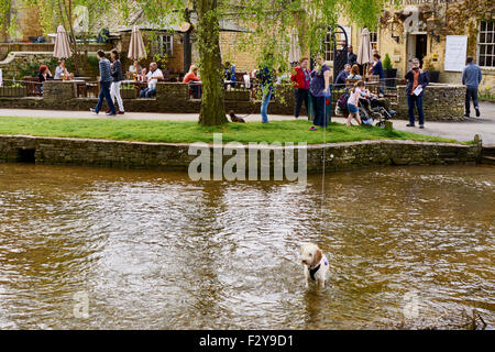 People and families enjoying a sunny day out by the river, dog paddling happily in the water. - Stock Photo