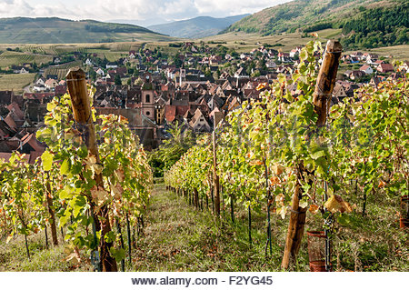A view of Riquewihr from the vineyards overlooking the village, in autumn sunlight. - Stock Photo