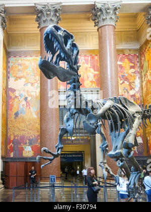 American Museum of Natural History, NYC - Stock Photo