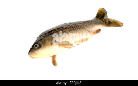 Freshly fish Crucian carp (Carassius auratus gibelio) isolated on white - Stock Photo