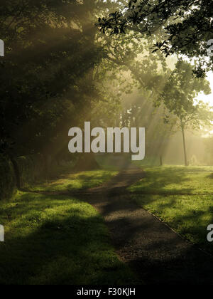 Early morning trees at Swinsty Reservoir in North Yorkshire - Stock Photo