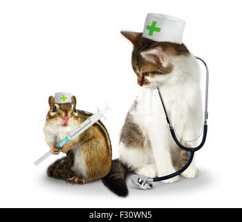Vet concept, funny doctor chipmunk  and cat with phonendoscope and syringe on white - Stock Photo