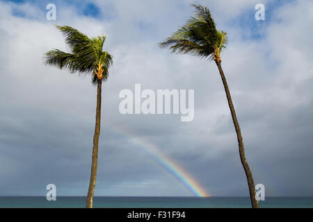 A rainbow between two palm trees. - Stock Photo