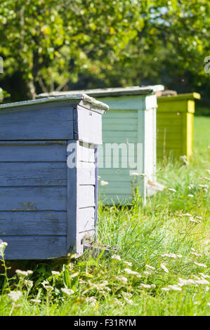 Three colorful beehives in a row, apiary vertical view - Stock Photo