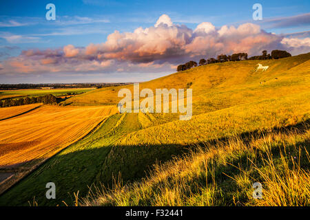 The White Horse at Cherhill in Wiltshire. - Stock Photo