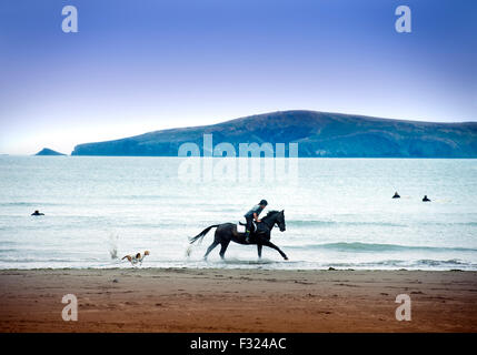 A horse rider on Poppit Sands near St Dogmaels, Pembrokeshire, Wales UK - Stock Photo