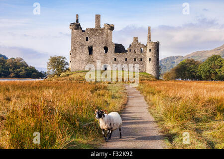 Kilchurn Castle, the path leading to it and a Scottish Blackface ram, Loch Awe, Argyll and Bute, Scotland, UK. - Stock Photo