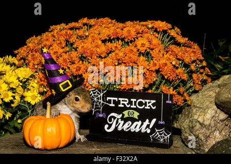 Halloween  Gray Squirrel - Stock Photo