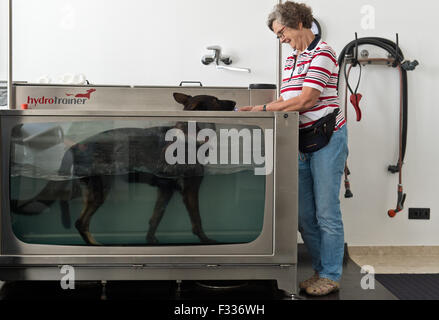 Gudrun Reinke with her dog Quicky, who is doing a stint on the underwater treadmill, during 'hydrotherapy' at the - Stock Photo