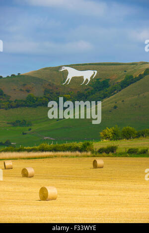 View to Westbury White Horse, Wiltshire at harvest time.The White Horse is a famous local landscape.  It is believed - Stock Photo