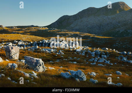 rocks and vegetation in Hottentots Holland Mountains, Western Cape, South Africa - Stock Photo