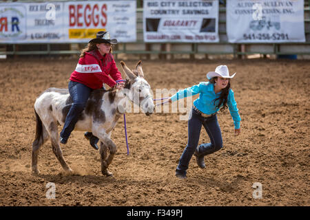 Mule Days, Donkey barrel race, Philomath Frolic & Rodeo, Oregon, USA - Stock Photo