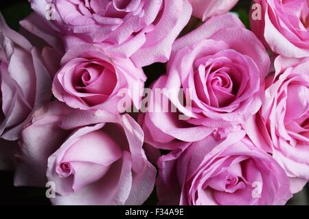 Closeup of a bunch of pink roses - Stock Photo