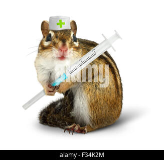 Vet concept, funny squirrel with syringe and doctor hat on white - Stock Photo