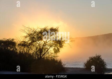 Sunrise in mist behind bush, Rotorua, North Island, New Zealand - Stock Photo