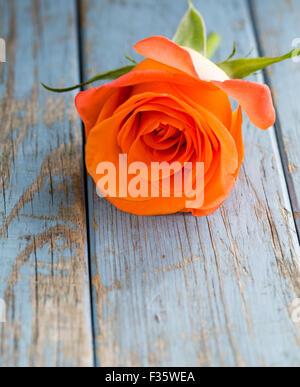 orange rose on turquoise vintage wooden background - Stock Photo