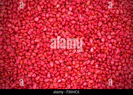 Chemically treated red corn seed ready for seeding season in cultivated field, full frame background - Stock Photo