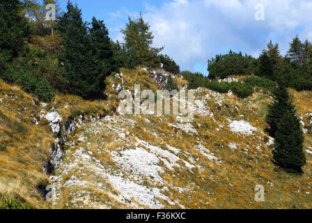 Mount Pasubio, locality Sogli Bianchi,  Veneto Pre-Alps. World War I,  Austro-Hungarian trenches. Mount Pasubio - Stock Photo