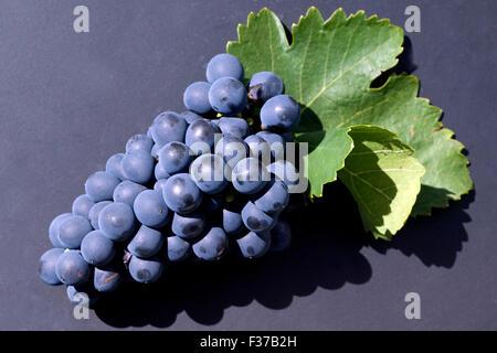 Syrah, Rotwein, Rote, Weintrauben, Weintraube, - Stock Photo