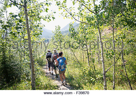 Hikers backpacks walking along sunny trail in woods - Stock Photo