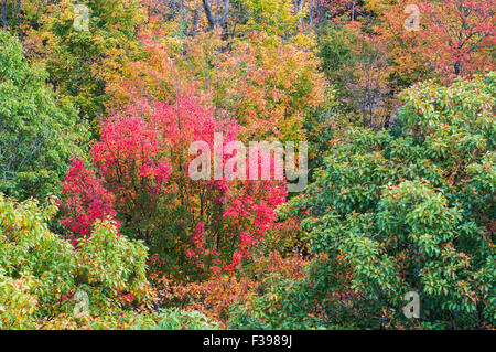 Close up view of red, orange, green and yellow-coloured fall trees near Dorset town, Canada - Stock Photo