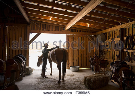 Tack Room In A Barn Horse Saddles And Harnesses Antique
