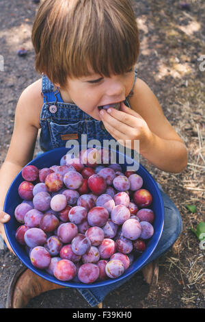 Overhead view of a boy eating freshly picked plum - Stock Photo