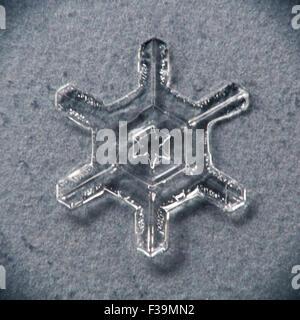 Single melting snowflake macro with gray/blue background - Stock Photo