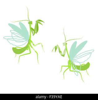 Praying mantis. Flat drawing illustration of insect on white background - Stock Photo